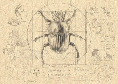 Compendium IV • 2015 • 21 x 29,5 cm • 鉛筆/画用紙