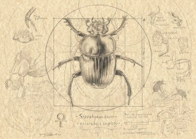Compendium IV • 2015 • 21 x 29,5 cm • grafito sobre papel