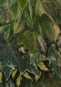 Ivy on Acanthus • 2009 • 200 x 40 cm • acrylic on wood panel