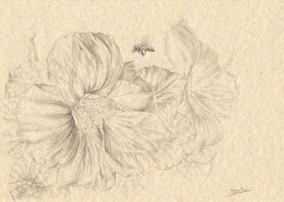 Memorias de Ibiza XV • 2015 • 21 x 29,5 cm • 鉛筆/画用紙