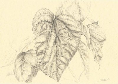 Memorias de Ibiza IV • 2015 • 21 x 29,5 cm • graphite on paper
