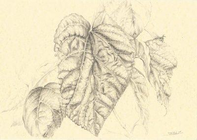 Memorias de Ibiza IV • 2015 • 21 x 29,5 cm • graphite sur papier