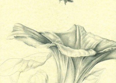 Memorias-en-San-Rafael_I · 29,5x21cm 2015 · الغرافيت على الورق · فنون تشكيلية • واقعية سحرية