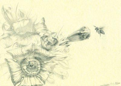 Memorias-en-San-Rafael_IV · 21x29,5cm · 2015 · الغرافيت على الورق · فنون تشكيلية • واقعية سحرية